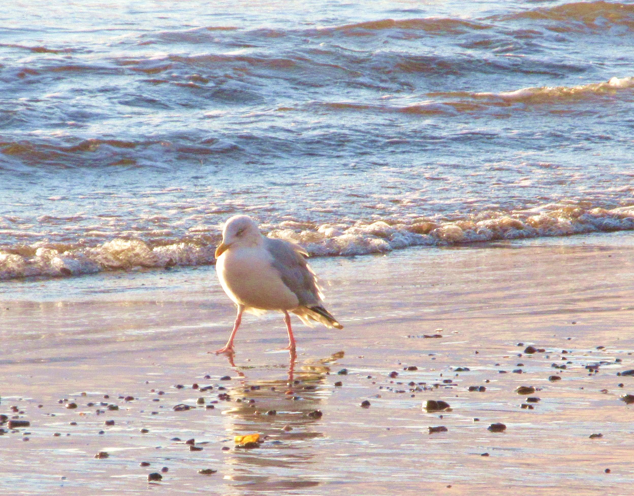 blog beach bully