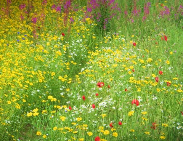 best wildflower