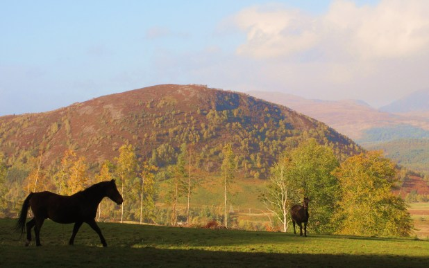 horse-silou-and-hill