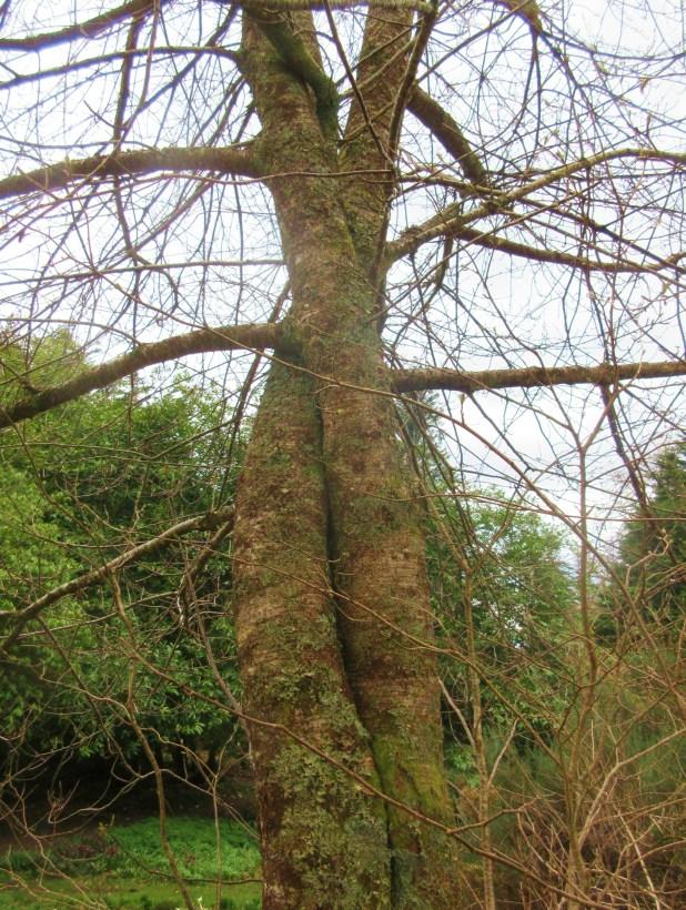 trees-hugging