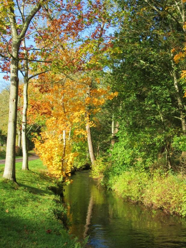 stream & trees