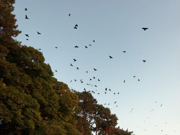blog birds