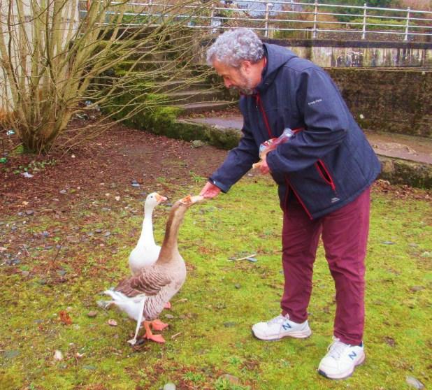 Alan goose friends