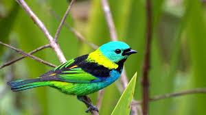 male bird 3