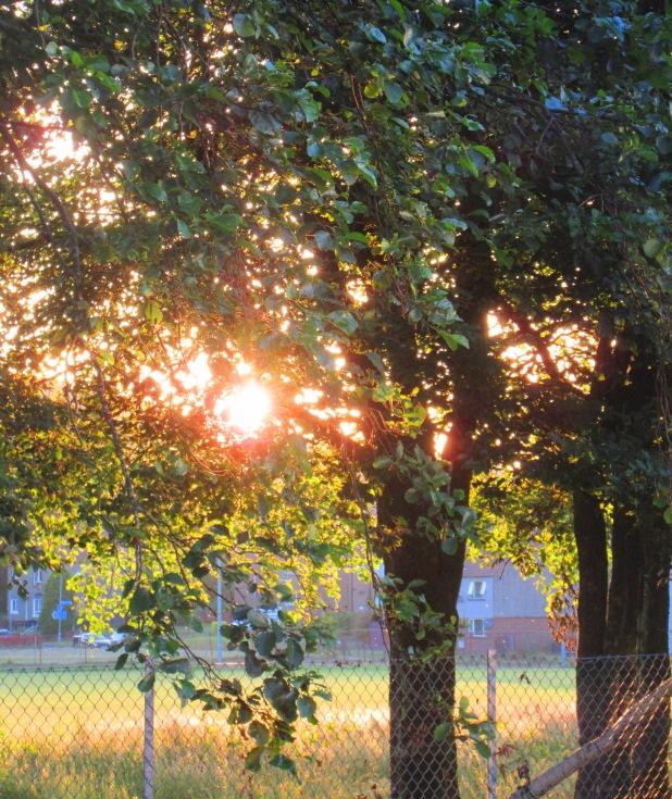 sun through tree 2