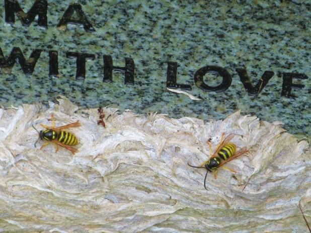 l hornets