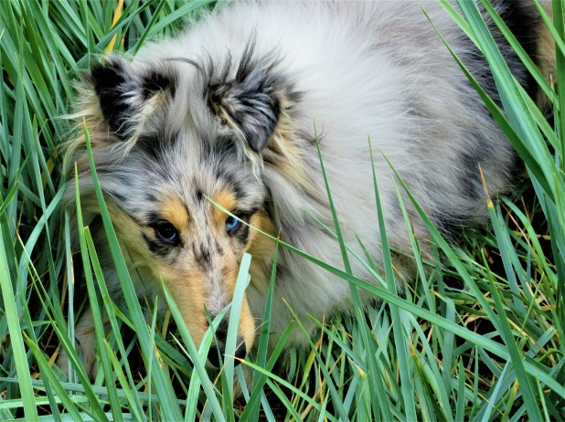 savannah in grass 6 month