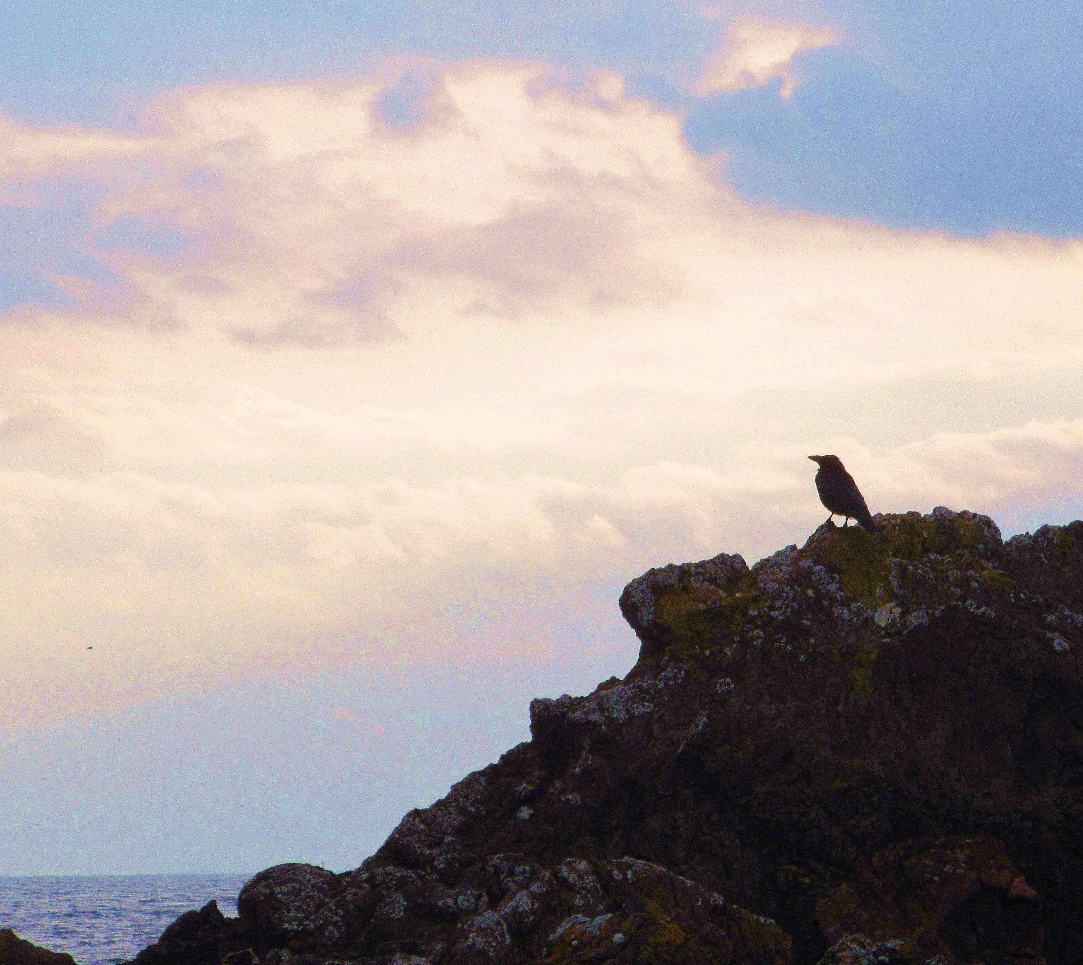 bird on rock alone