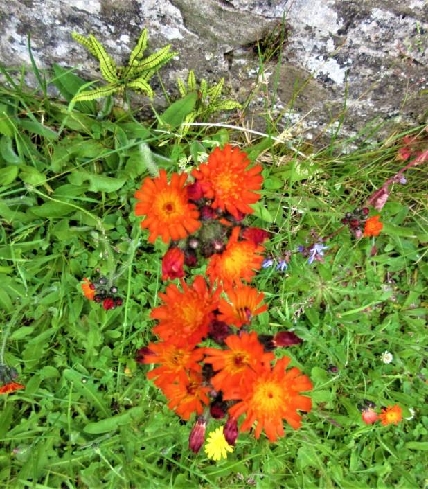 flowers orange yellow weeds